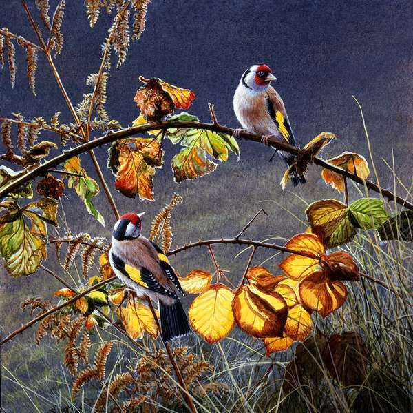 Golden circle - goldfinches, 1996, acrylic on board