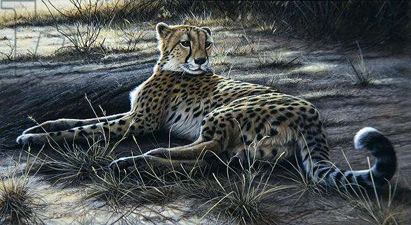 Place in the Shade, Cheetah, 1999 (acrylic on board)