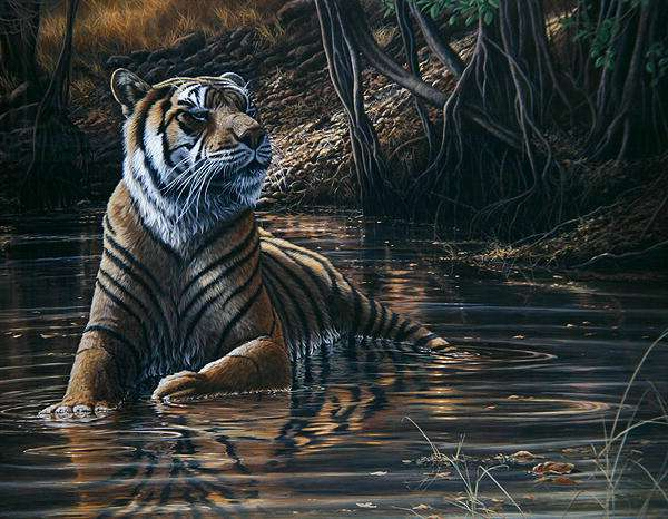 Looking Cool, Tiger, 2000 (acrylic on board)