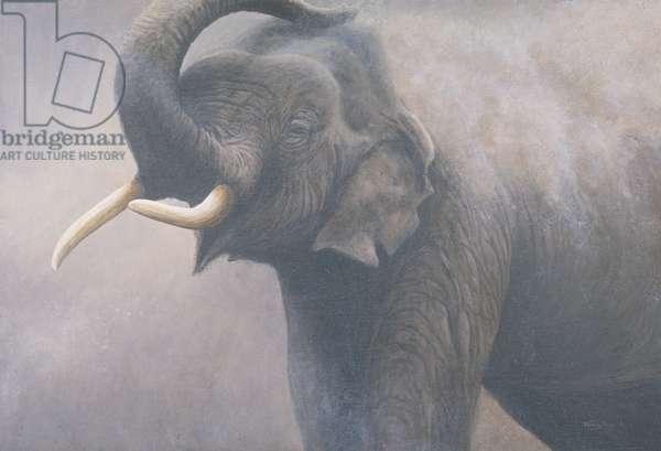 Dusting, Indian Elephant, 1995 (acrylic on board)