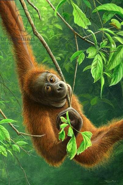 Orangutan, 2014, acrylic on board