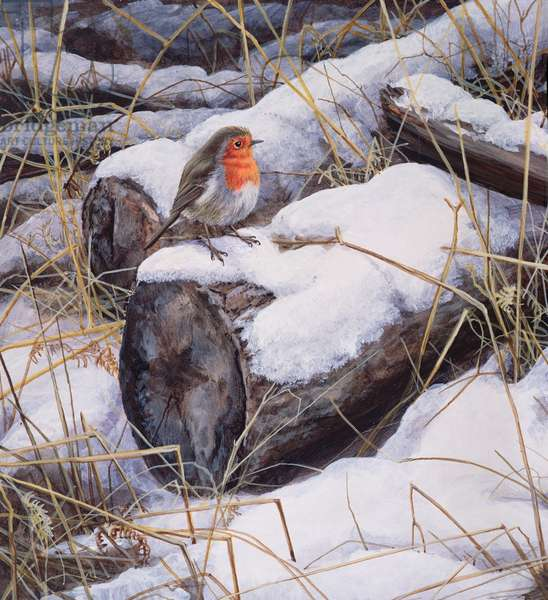 Robin, 1995 (acrylic on board)
