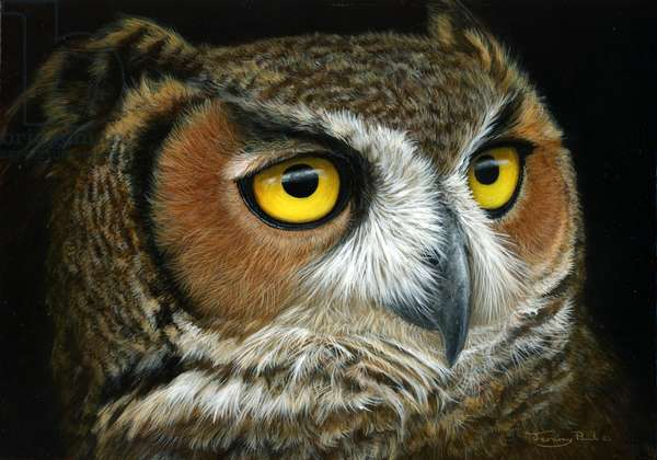 Great horned owl,2015,acrylic on board