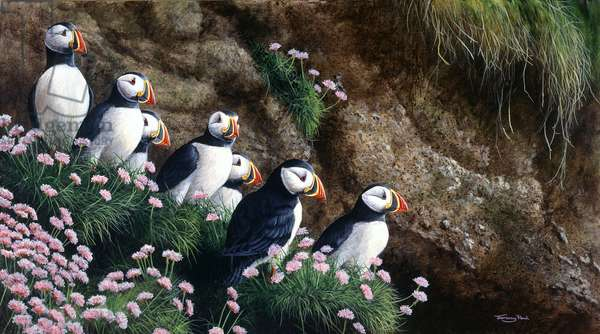 Puffins, 1993, acrylic on board