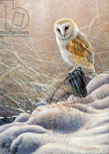 Winter glow - barn owl, 2018, acrylic on board