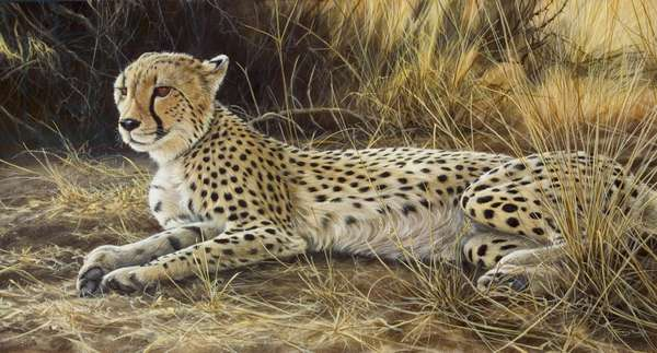 Cheetah, 2005 (acrylic on board)