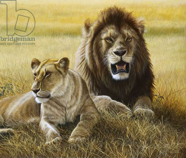 Marsh Pride Lions, 2014, acrylic on bord