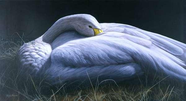 Whooper Swan, 1996 (acrylic on canvas)