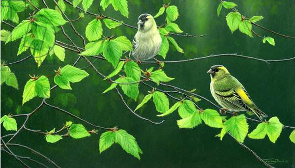Spring greens - siskins, 2014, acrylic on board