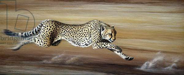 Closing in, Cheetah, 1999 (acrylic on board)