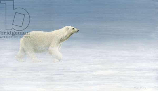 Polar bear, acrylic on board, 2017