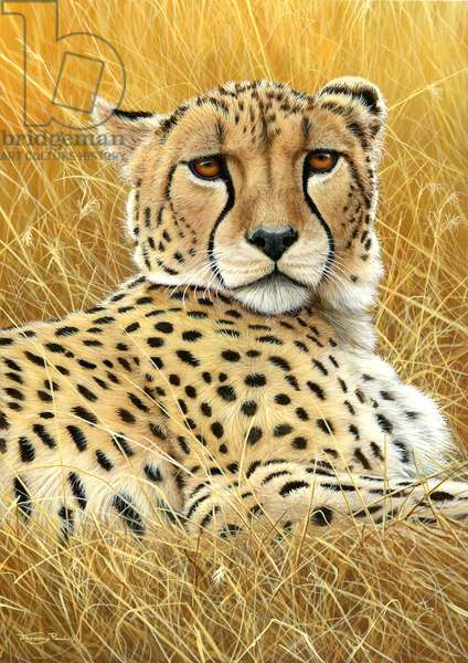 Cheetah portrait, 2013, acrylic on board