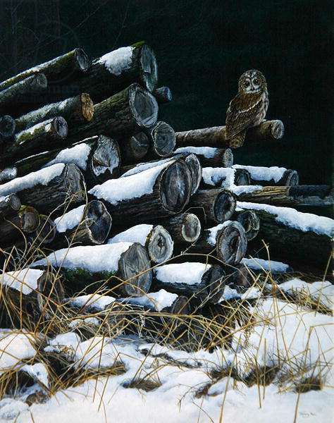 All in a mouse's night, tawny owl, 1989 (acrylic on board)