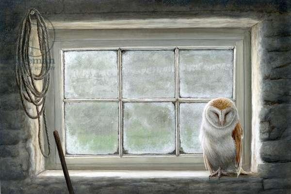 Window - barn owl, 2018, acrylic on board
