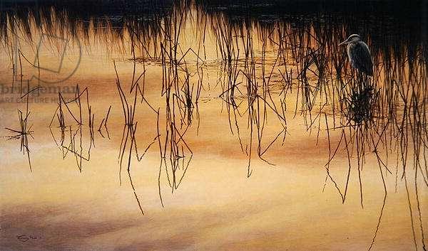 Reflected Light, Heron, 1995 (acrylic on board)