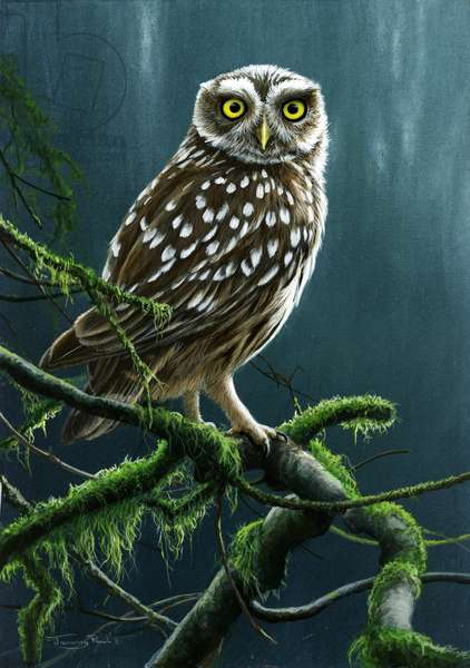 What!? - Little owl, 2015, acrylic on board