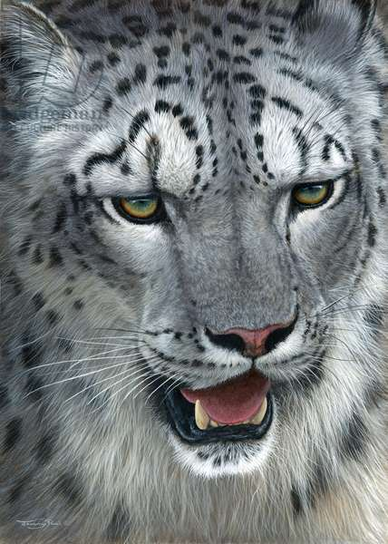 Snow Leopard, 2014, (acrylic on board)