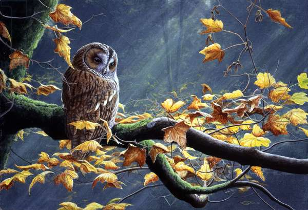 Tawny owl - autumn leaves, 1993, acrylic on board
