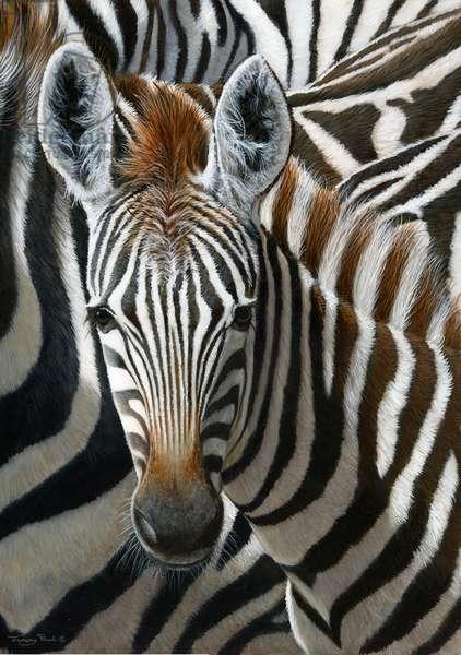 Stripes - zebra, 2014, acrylic on board