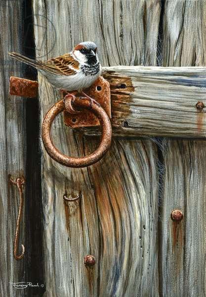old door - house sparrow, 2018, acrylic on board