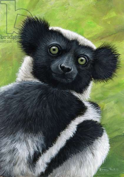 'Quizzical' Indri (lemur), 2018, acrylic on board