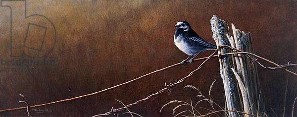 On the wire, pied wagtail, 1995 (oil on board)