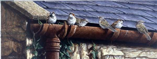 Life in the Gutter - house sparrows, 1998, acrylic on board