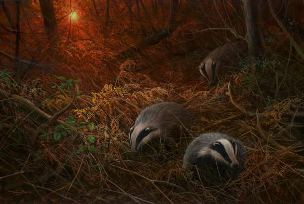 Sunset foraging - badgers, 2018, acrylic on board