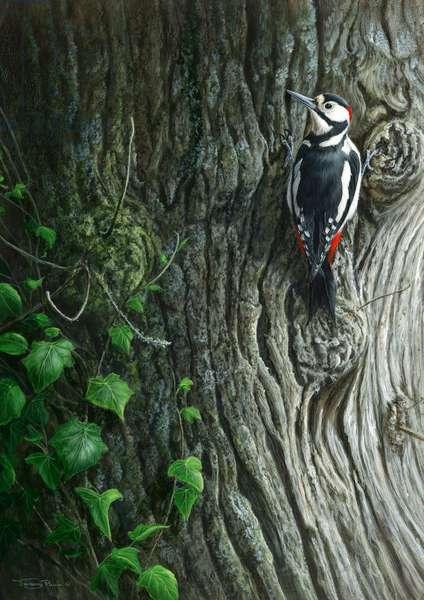 Great spotted woodpecker, 2014, acrylic on board