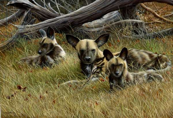 African wild dogs, 2013, acrylic on board
