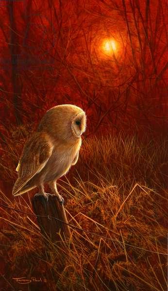 Sunsown - barn owl, 2017, acrylic on board