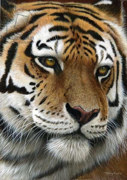 Tiger, 2014, acrylic on board