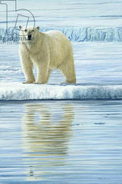 Curious polar bear, 2013, acrylic on board
