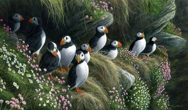 Puffins, 2017, acrylic on board