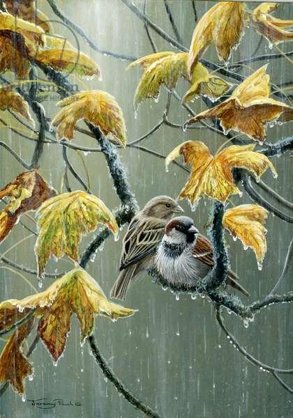 Rainy Day sparrows 2014, acrylic on board