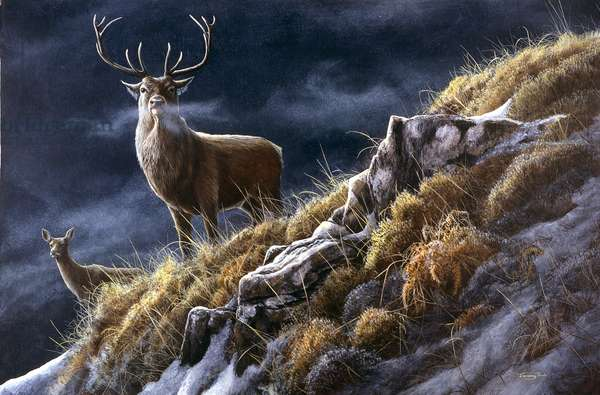 Red deer - stag and hinds, 1993, acrylic on board