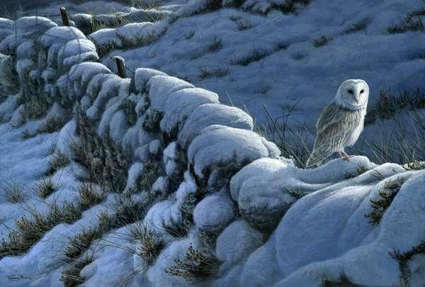 Winter wall - barn owl, 2015, acrylic on board