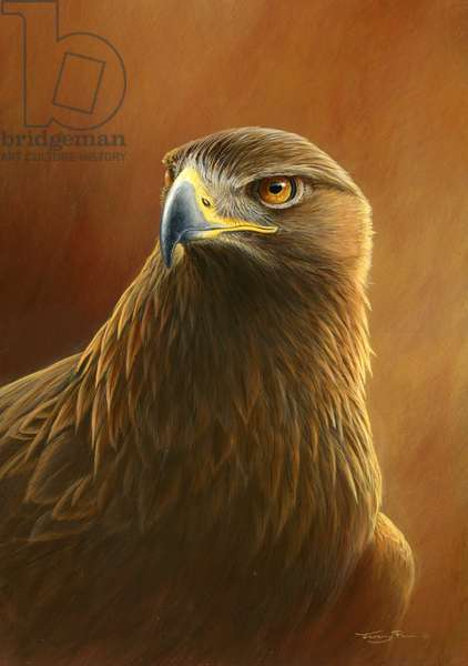 Golden eagle, 2014, acrylic on board