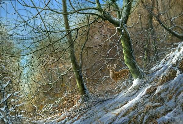 Woodland edge - stag, 2014, acrylic on board