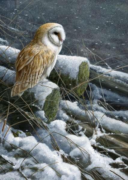 Snow Flurries - barn owl, acrylic on board 2016