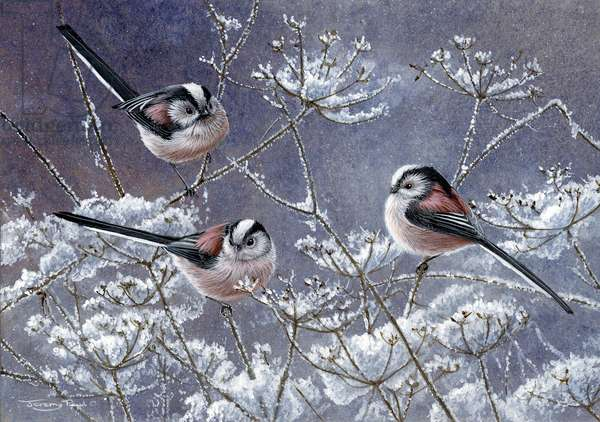 Winter long tailed tits, 2013, acrylic on board