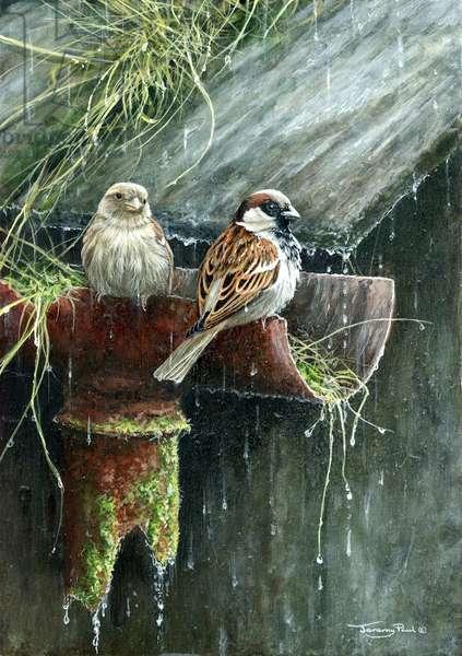 Still raining - sparrows, 2018, acrylic on board