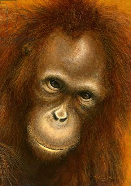 Mirror - orang utan, 2015, acrylic on board