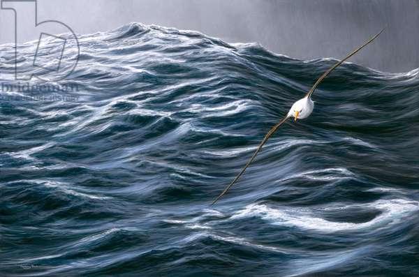 Rolling Ocean - Blackbrowed Albatross, 2005 (acrylic on board)