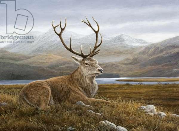 Highland Stag, 2007 (acrylic on board)