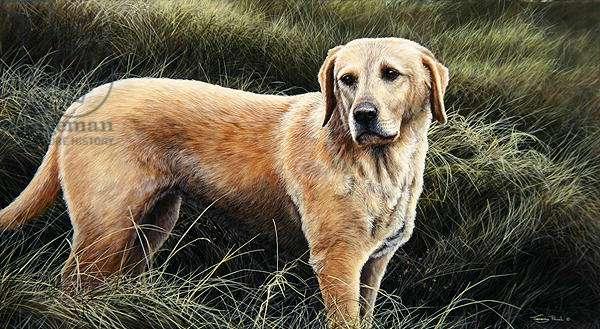 Good Companion, golden lab, 1997 (acrylic on board)