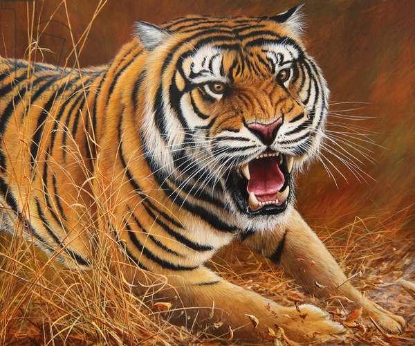 Rush, Bengal tiger 2017 acrylic on board