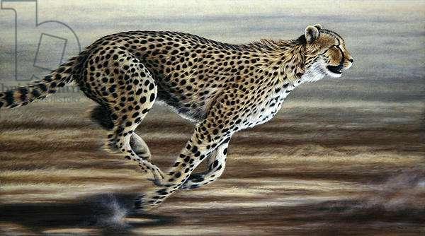 Chase, cheetah, 2000 (acrylic on board)