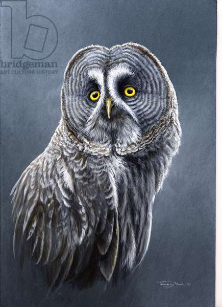 Great Grey Owl, 1996,(acrylic on board)
