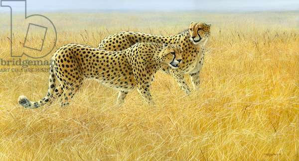 Brothers - cheetah pair, 2017, acrylic on board